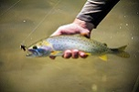 Visit Scenic Places, Catch Utahs State Fish
