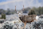Help Decide How Wildlife is Managed in Utah