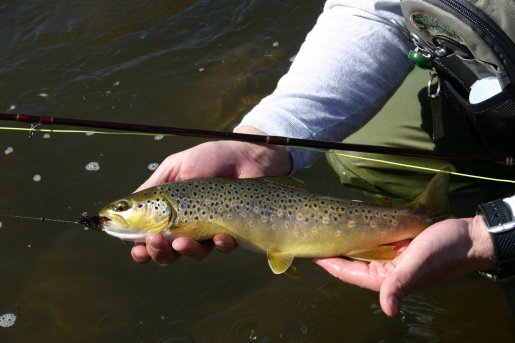 Thousands of rainbows aggressive brown trout utah for Trout fishing utah