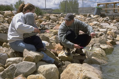 Fewer but bigger fish to be stocked this year