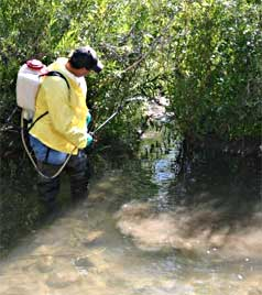 Applying rotenone in Diamond Fork river
