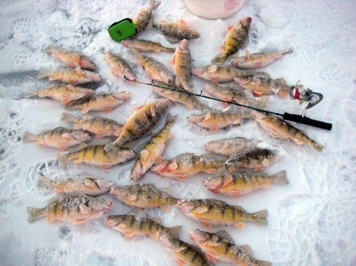 Basic equipment equals fish and fun on the ice utah for Southern utah fishing report