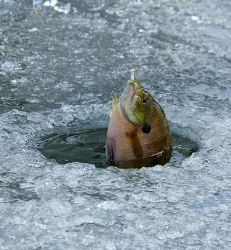 Ice fishing tips utah fishing news utah fishing info for Ice fishing lures for panfish