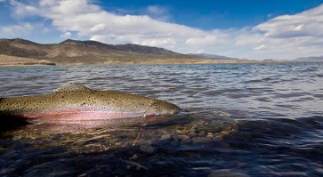 5 Big Lakes That Offer Great Spring Fishing