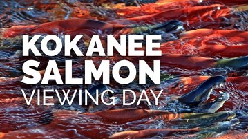 Kokanee Salmon viewing day at Electric Lake