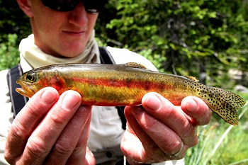 High Elevation Waters Offer Great Summer Fishing