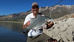 Learn how and where to fish for wipers in Northern Utah