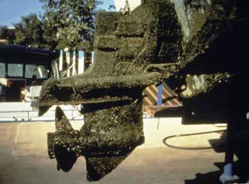Boat motor covered with Quagga Mussels