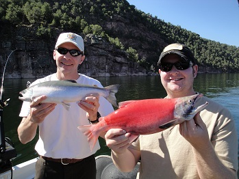 Kokanee Salmon caught while trolling