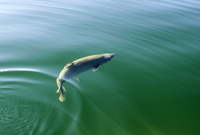 Fishing changes proposed for 2019 and 2020