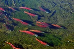 See Kokanee Salmon at Strawberry Reservoir